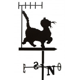 Chat Antenne