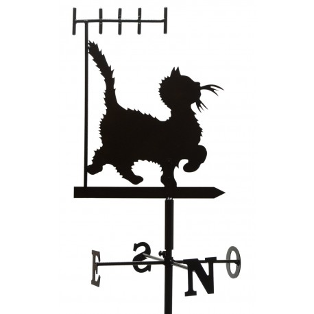 antenne chat